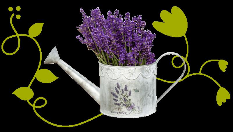 Ullis Lavendel